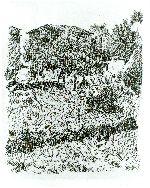 Giorgio Morandi - Il poggio al mattino (Grizzana)